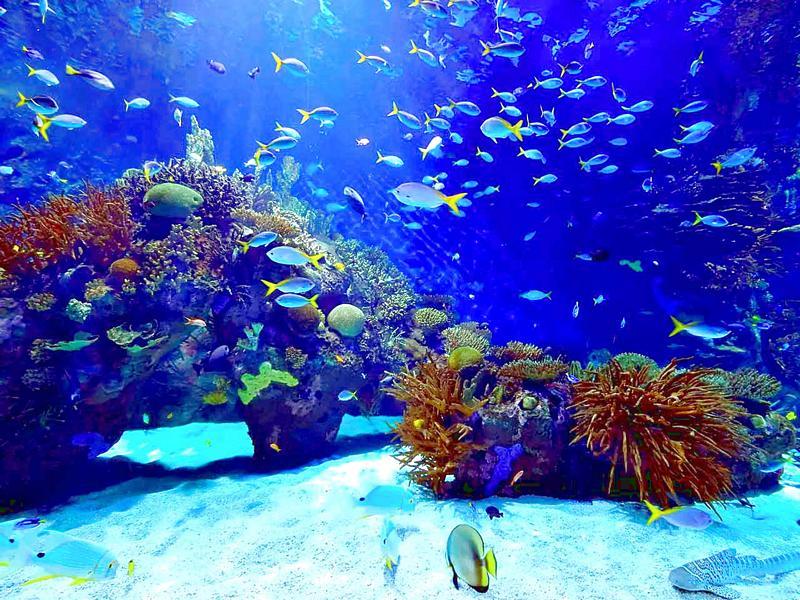 Lahinch Aquarium